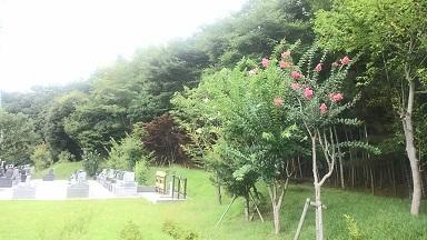 園内の百日紅(サルスベリ)