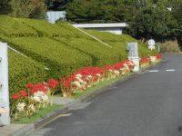法要の方「東京多摩霊園を親戚に褒められて喜んでいると思います」