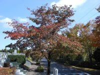 お参りの方「東京多摩霊園の日本庭園で孫と一緒に紅葉刈りが出来ました」