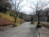 お参りの方「桜並木が素敵で決めました」