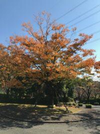 埋葬の方「今年初めての紅葉狩りは東京多摩霊園です」