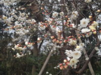法要の方「妻は東京多摩霊園からの景観が好きでした」」