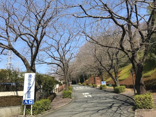 お参りの方「桜の花が咲くのが今から待ち遠しいです」