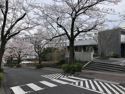 桜 開花情報(3月28日) & 4月イベント中止のご案内